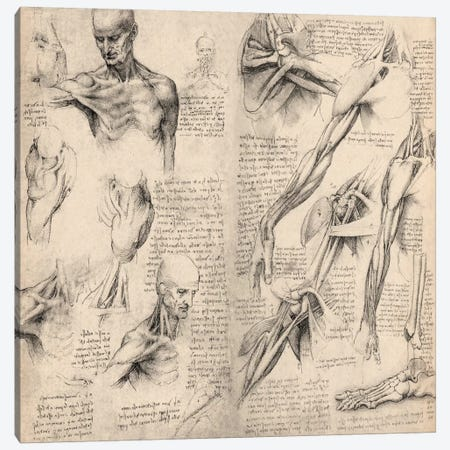 Sketchbook Studies of Human Body Collage Canvas Print #13958} by Leonardo da Vinci Canvas Artwork