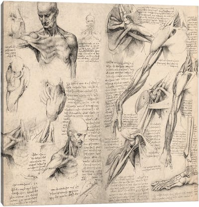 Sketchbook Studies of Human Body Collage by Leonardo da Vinci Canvas Artwork