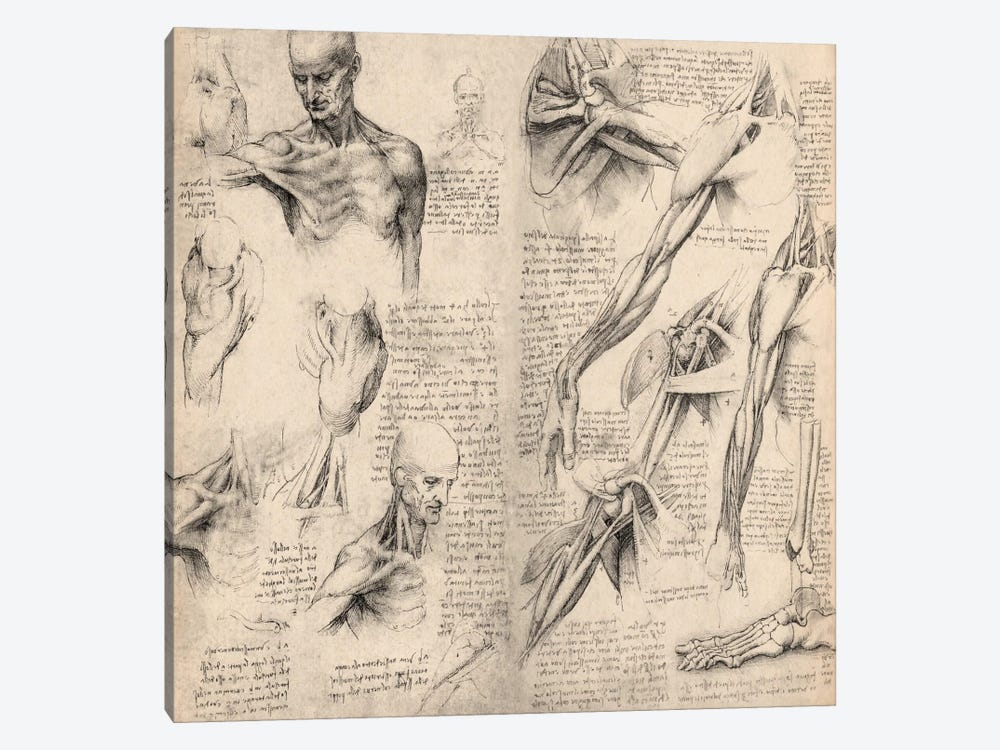 Sketchbook Studies Of Human Body Collage C Leonardo Da Vinci