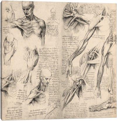 Sketchbook Studies of Human Body Collage Canvas Art Print