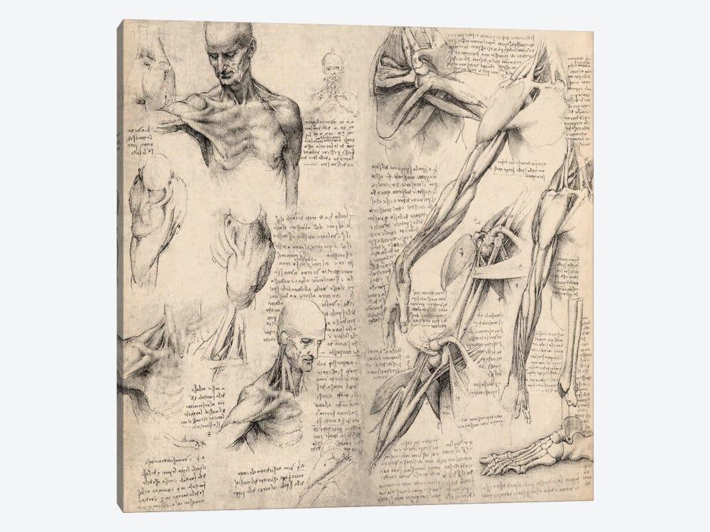 Sketchbook Studies of Human Body Collage by Leonardo da Vinci 1-piece Canvas Print