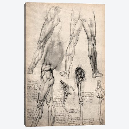 Sketchbook Studies of Human Legs Canvas Print #13959} by Leonardo da Vinci Canvas Art