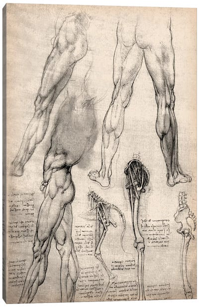 Sketchbook Studies of Human Legs by Leonardo da Vinci Canvas Art