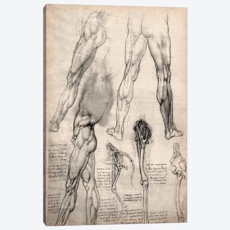 Sketchbook Studies of Human Legs Canvas Print #13959} by Leonardo da Vinci Canvas Art