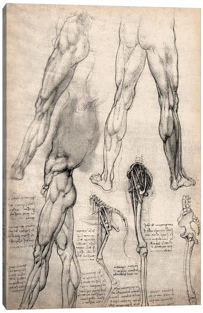 Sketchbook Studies of Human Legs Canvas Art Print