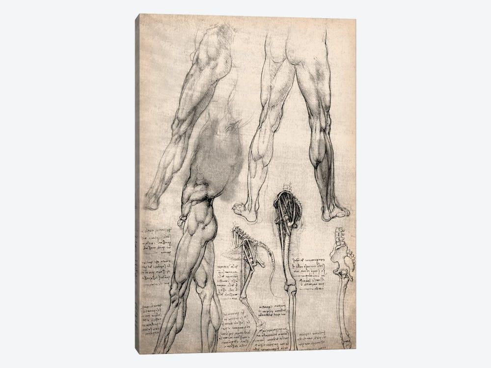 Sketchbook Studies of Human Legs by Leonardo da Vinci 1-piece Canvas Wall Art