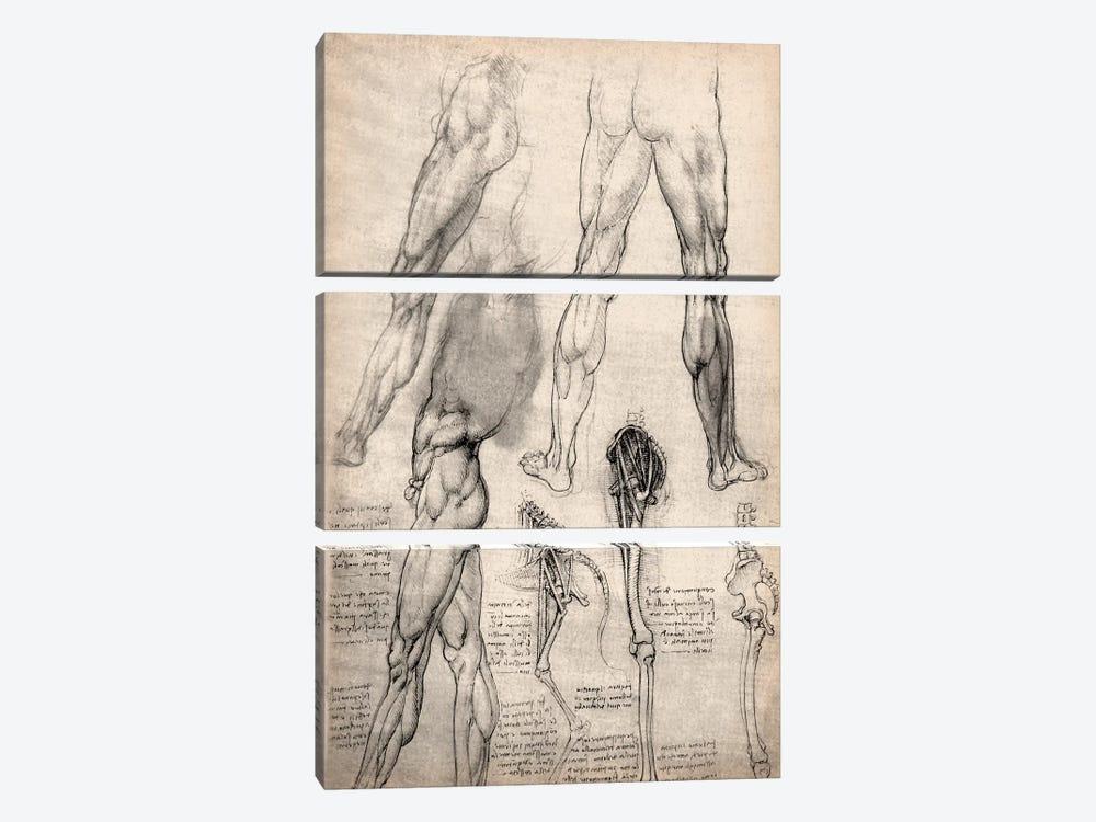 Sketchbook Studies of Human Legs by Leonardo da Vinci 3-piece Canvas Wall Art