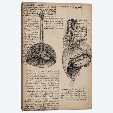 Sketchbook Studies of Human Organs Canvas Print #13960} by Leonardo da Vinci Art Print