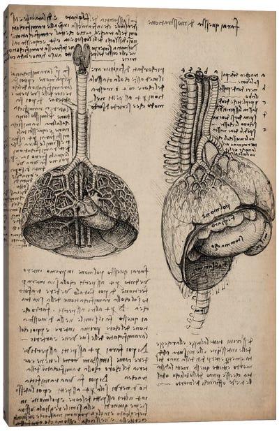Sketchbook Studies of Human Organs Canvas Print #13960