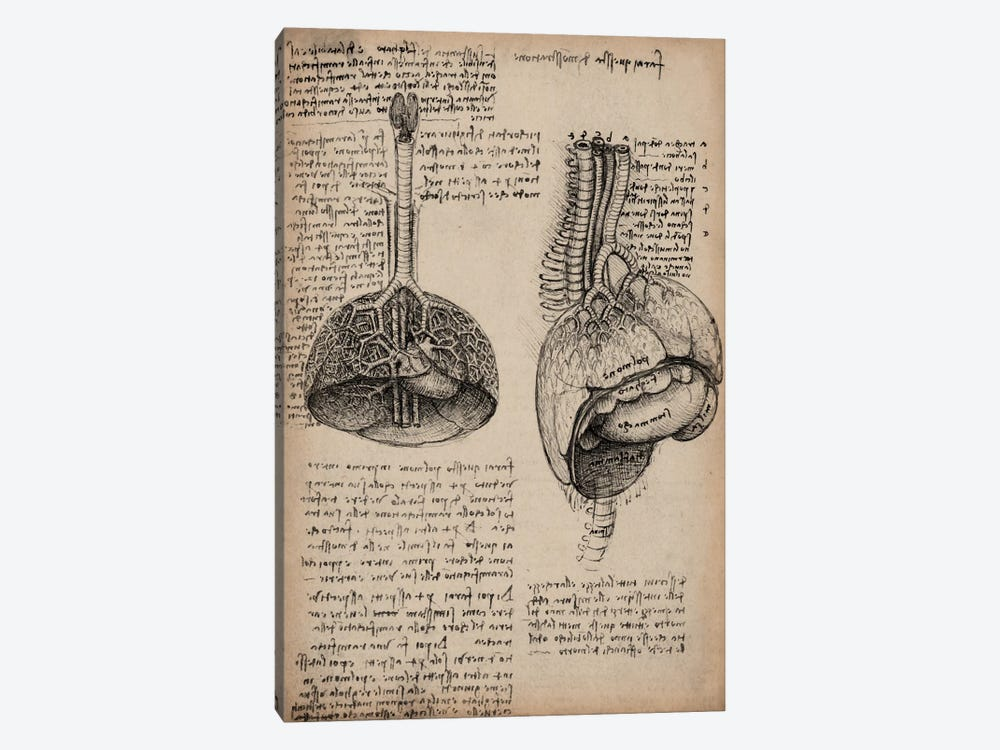 Sketchbook Studies of Human Organs by Leonardo da Vinci 1-piece Canvas Art