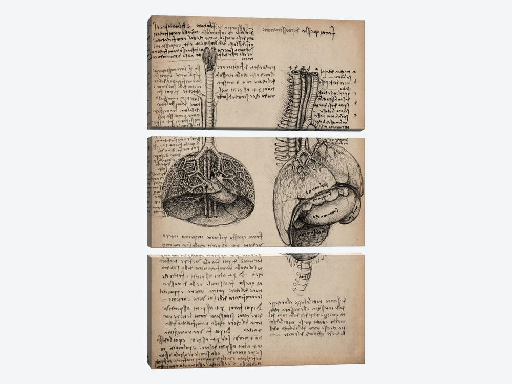 Sketchbook Studies of Human Organs by Leonardo da Vinci 3-piece Canvas Art