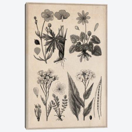 New British Herbal Sketch Canvas Print #13965} by Unknown Artist Canvas Art