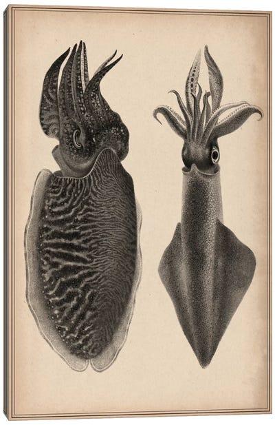 Octopus Squid Scientific Drawing Canvas Art Print