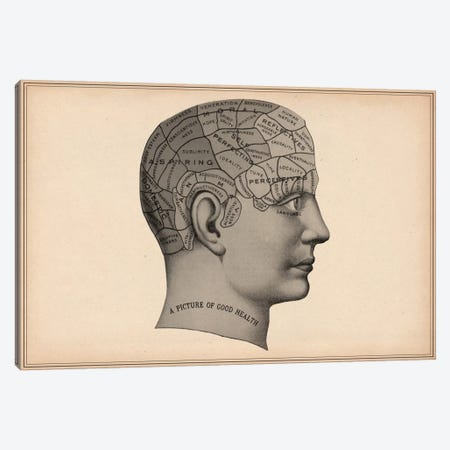 Phrenology Human Head Canvas Print #13969} by Unknown Artist Art Print