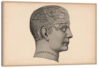 Phrenology Human Head Canvas Print #13969