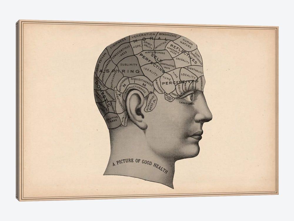 Phrenology Human Head by Unknown Artist 1-piece Canvas Print