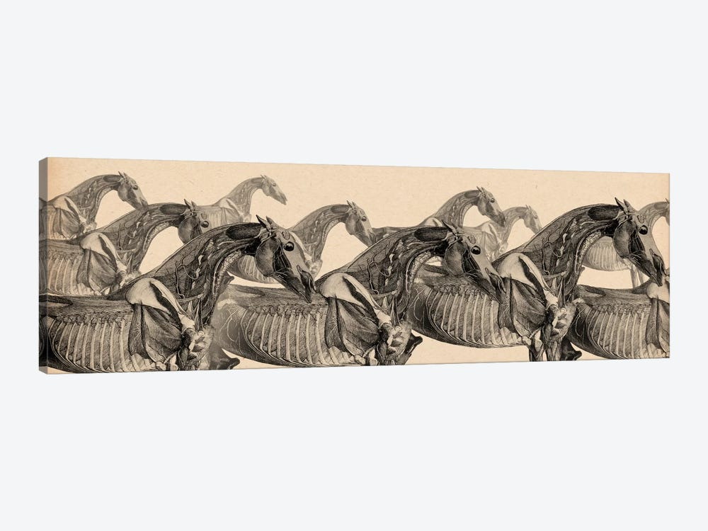 Race Horse Anatomy Collage by Unknown Artist 1-piece Art Print