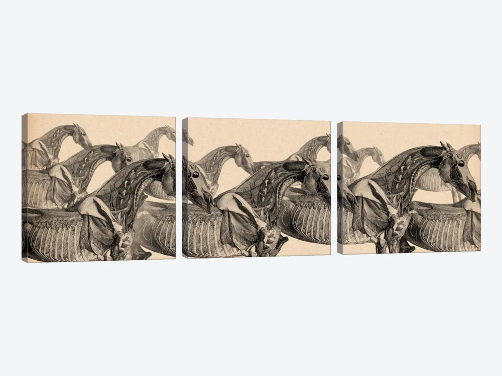 Race Horse Anatomy Collage by Unknown Artist 3-piece Canvas Art Print