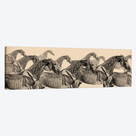 Race Horse Anatomy Collage Canvas Print #13970} by Unknown Artist Canvas Artwork