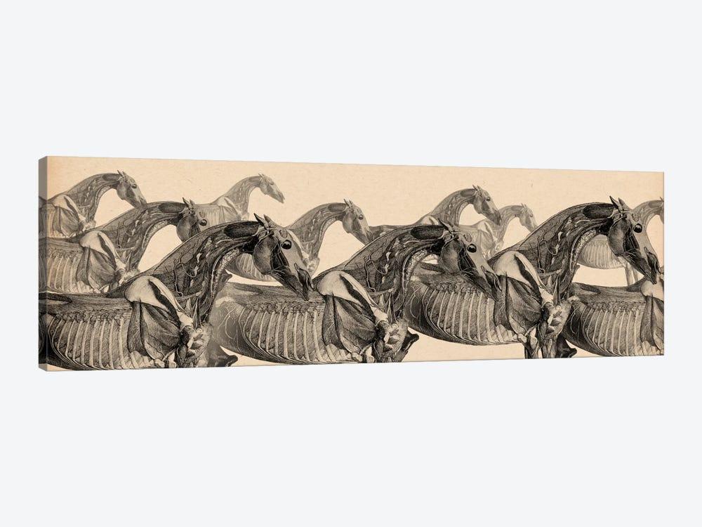 Race Horse Anatomy Collage by Unknown Artist 1-piece Art Print