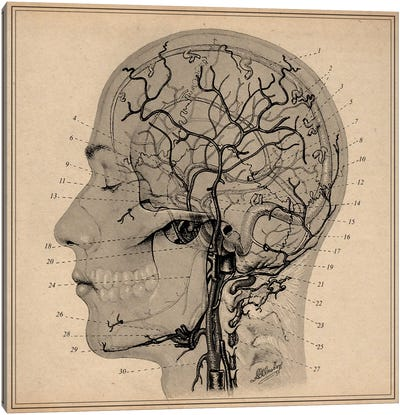 Anatomy of Human Head Canvas Art Print
