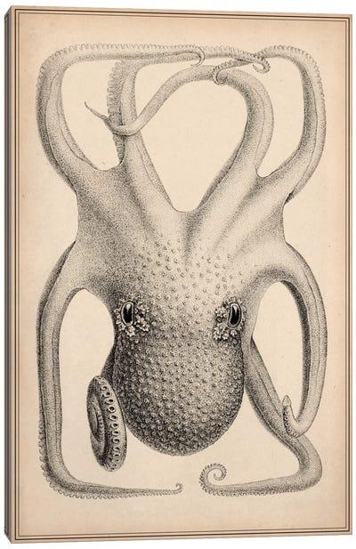 Cephalopoda of the Hawaiian Islands Canvas Art Print