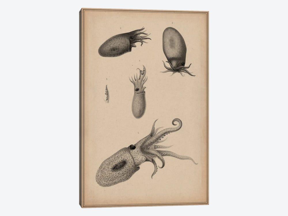Animal Curiosity Octopus Die Cephalopoden by Unknown Artist 1-piece Canvas Art