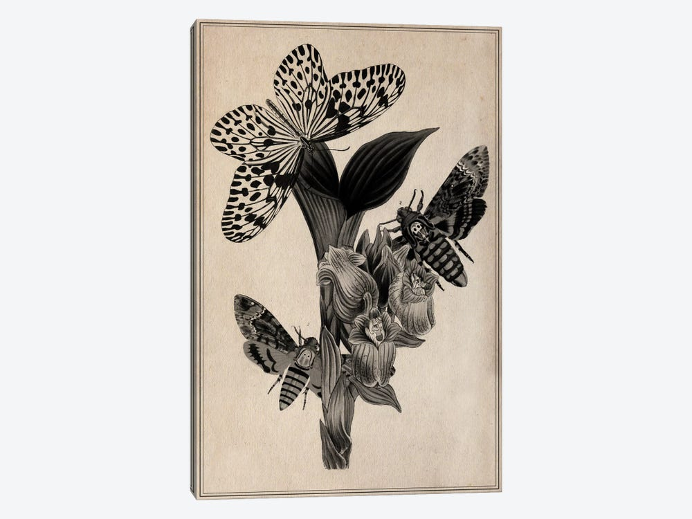 Butterflies Scientific Drawing 1-piece Canvas Wall Art