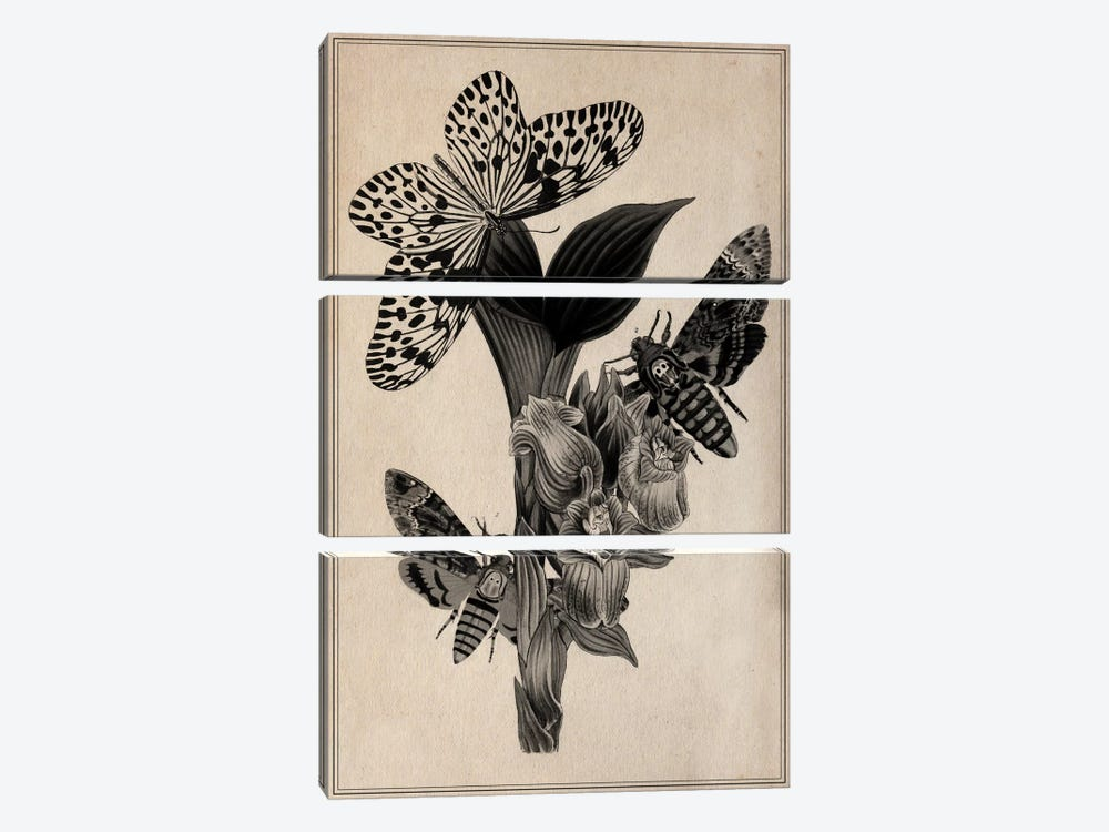 Butterflies Scientific Drawing 3-piece Canvas Artwork