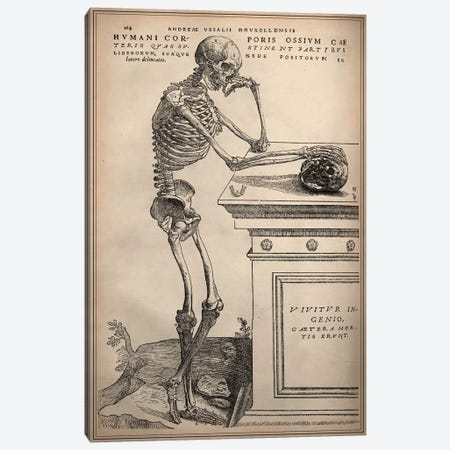 De Humani Corporis Fabrica Skeleton Standing Canvas Print #13985} by Vesalius Canvas Artwork