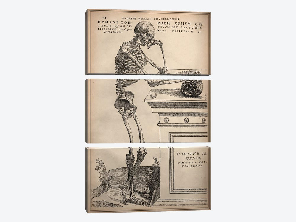 De Humani Corporis Fabrica Skeleton Standing by Vesalius 3-piece Canvas Art Print