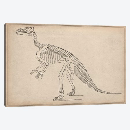 Iguanodon Skeleton Anatomy Canvas Print #13987} by Unknown Artist Canvas Artwork