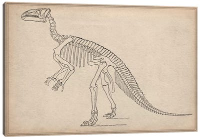 Iguanodon Skeleton Anatomy Canvas Print #13987