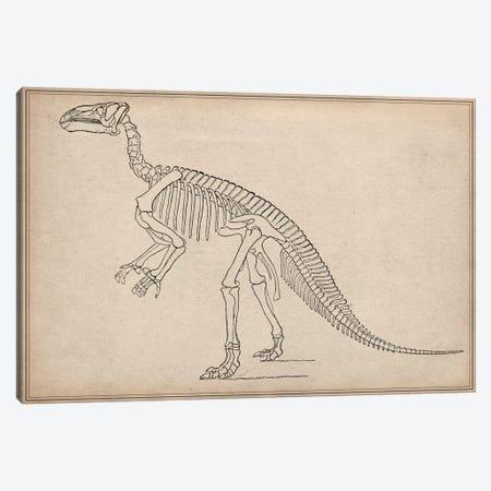 Iguanodon Skeleton Anatomy Canvas Print #13987} by Unknown Artist Canvas Artwork