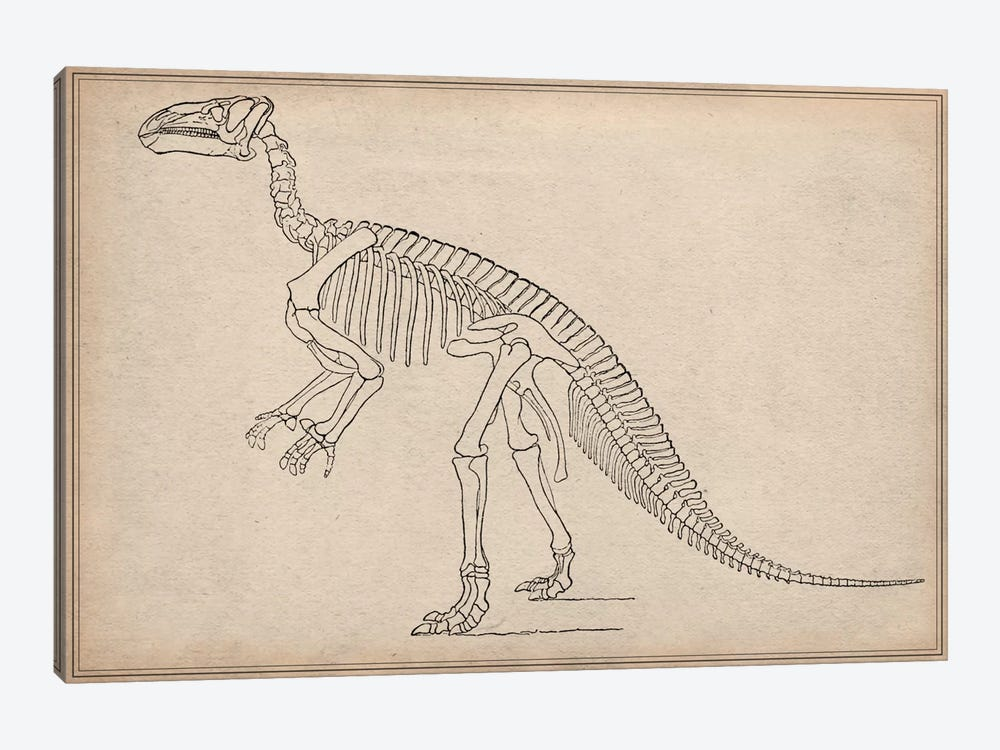 Iguanodon Skeleton Anatomy by Unknown Artist 1-piece Art Print