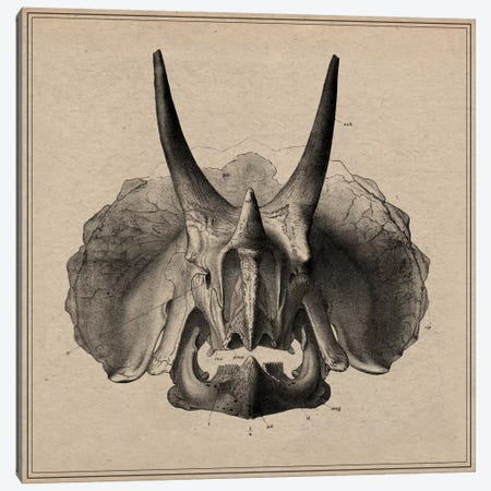 Triceratops Skull Anatomy Canvas Print #13988} by Unknown Artist Art Print