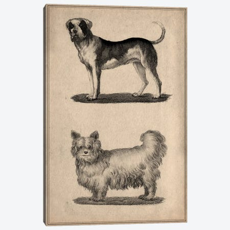 Vintage French Dogs Canvas Print #13991} Canvas Wall Art