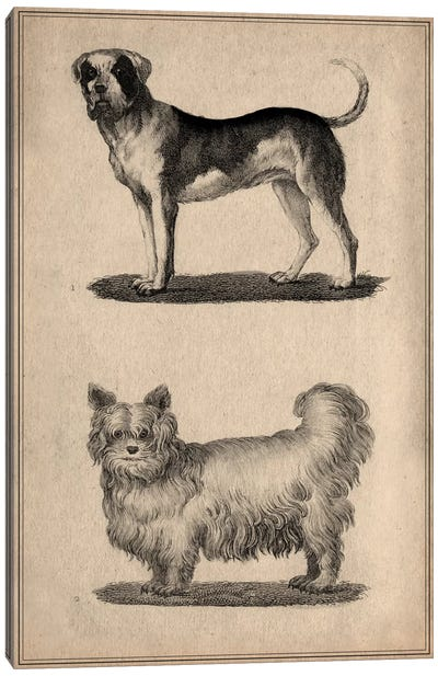Vintage French Dogs Canvas Art Print