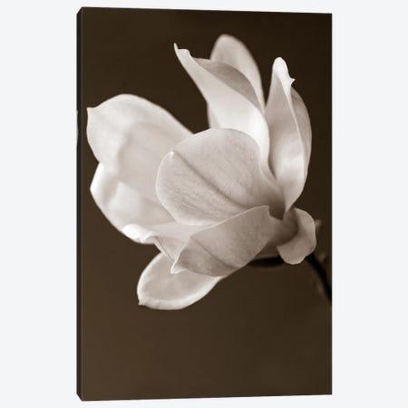 Sepia Magnolia Canvas Print #14172} by Symposium Design Art Print