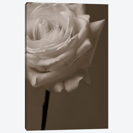 Sepia Rose Canvas Print #14173} by Symposium Design Canvas Art Print