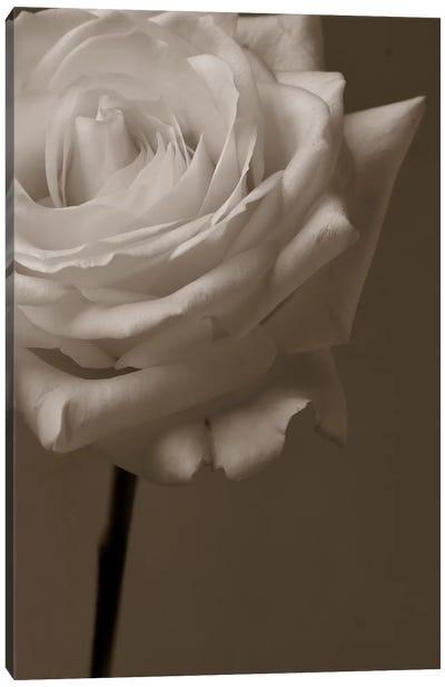 Sepia Rose Canvas Art Print