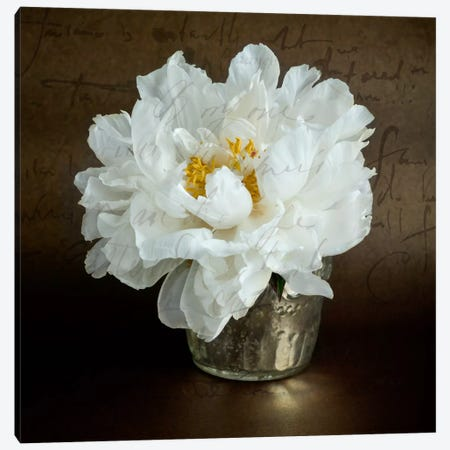 Calligraphic Peony II Canvas Print #14183} by Symposium Design Canvas Art