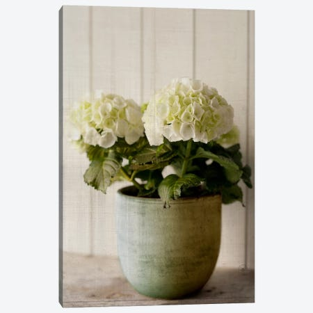 Potted Hydrangea Canvas Print #14186} by Symposium Design Canvas Art Print