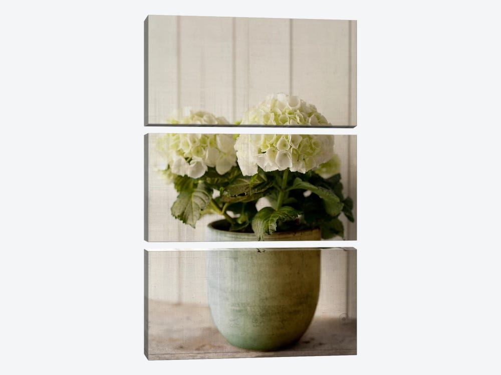 Potted Hydrangea by Symposium Design 3-piece Art Print