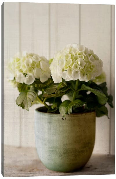 Potted Hydrangea Canvas Art Print