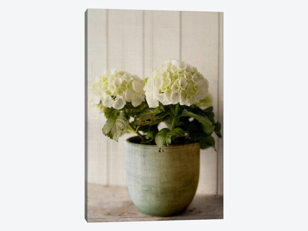 Potted Hydrangea by Symposium Design 1-piece Art Print