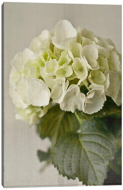 Hydrangea I Canvas Print #14187