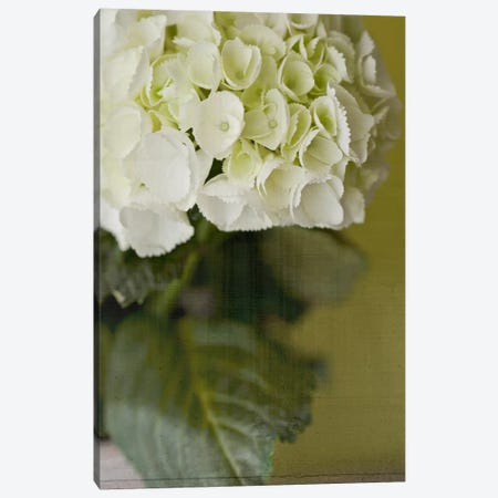 Hydrangea II Canvas Print #14188} by Symposium Design Canvas Art