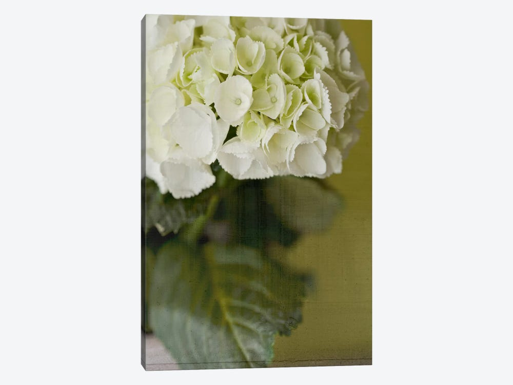 Hydrangea II by Symposium Design 1-piece Canvas Print