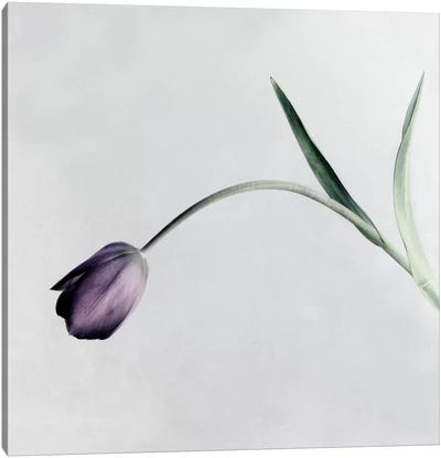 Tulip I Canvas Art Print